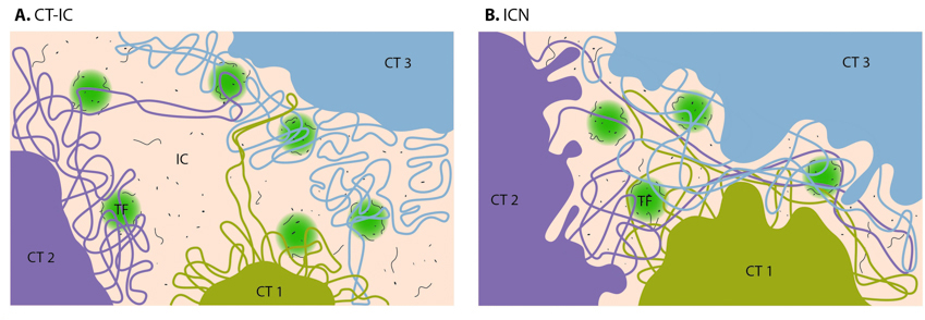 chromosomal-territories