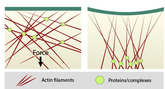 forces-bring-molecules-together