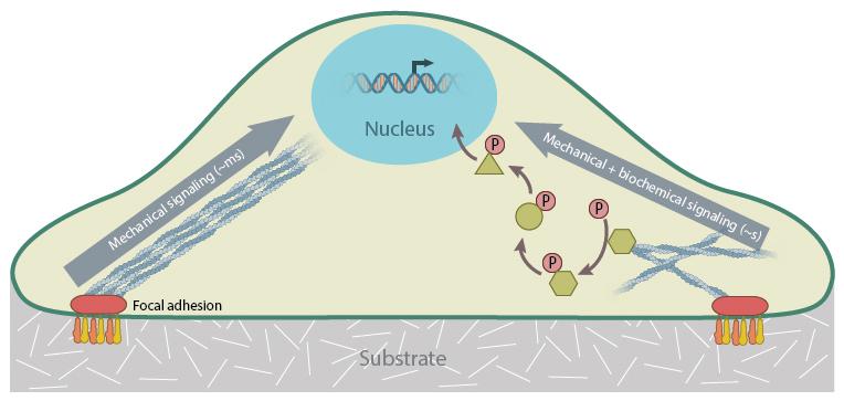 signaling-pathways
