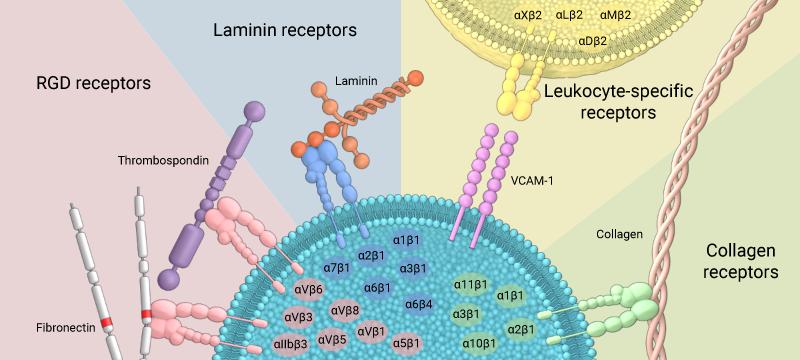 ligands-binding-integrin